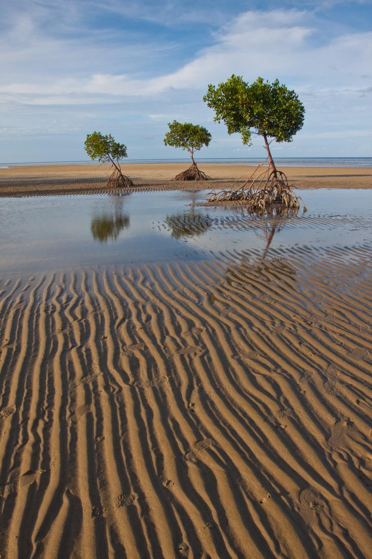 Mangroves are important habitats for marine life, they act as filters for land-based run-off and protect nearby coral reefs, seagrass beds and coastal areas (Photo: Mark Ziembicki)